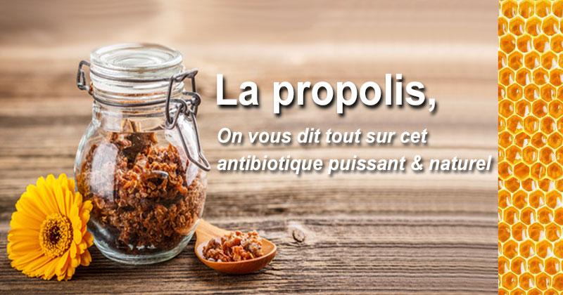 #propolis
