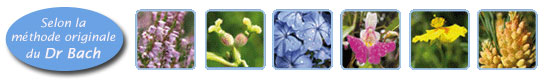 Rescue - Remède de secours - Fleurs de Bach bio